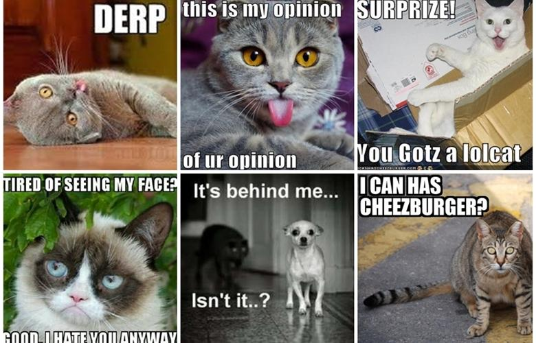 memescats?itok=H1B1ZqfY what type of cat are you? rum and monkey